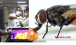 Covid-19 Updates, Houseflies can transmit coronavirus